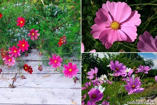 Какие-цветы-посадить-на-даче-36