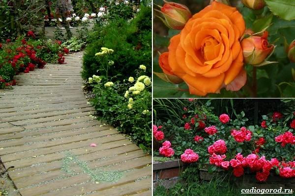 Какие-цветы-посадить-на-даче-37