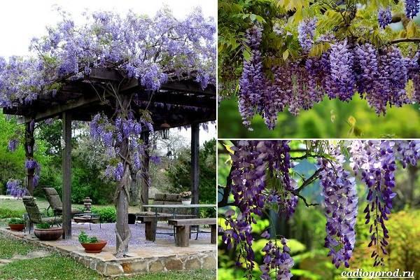 Какие-цветы-посадить-на-даче-38