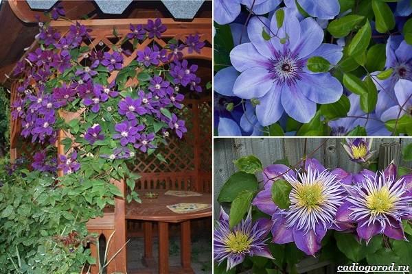 Какие-цветы-посадить-на-даче-39