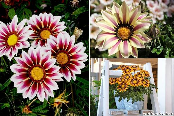 Какие-цветы-посадить-на-даче-4