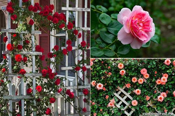 Какие-цветы-посадить-на-даче-40