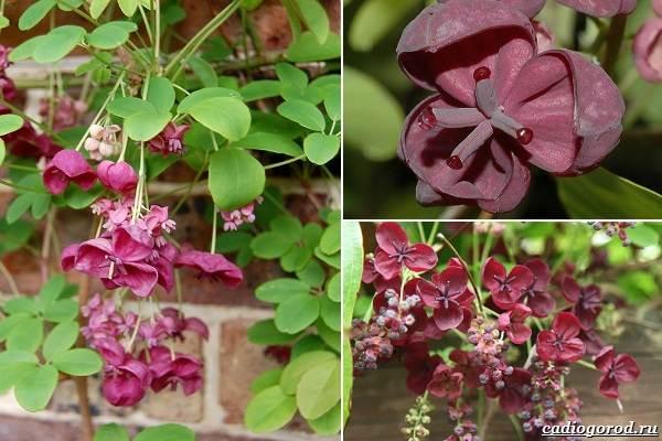 Какие-цветы-посадить-на-даче-42
