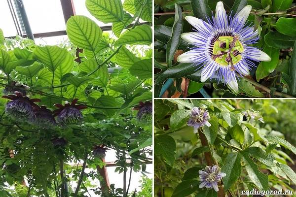 Какие-цветы-посадить-на-даче-43