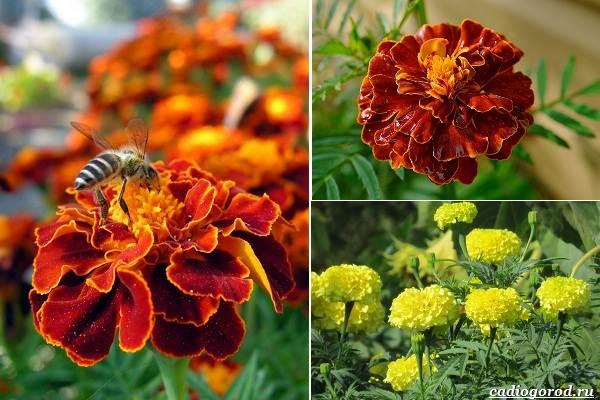 Какие-цветы-посадить-на-даче-44