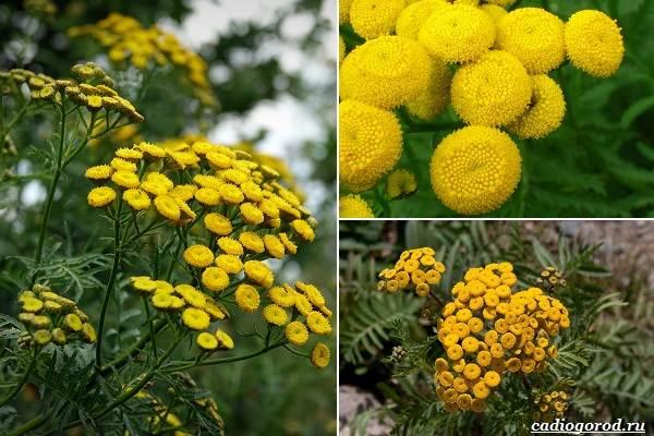 Какие-цветы-посадить-на-даче-45