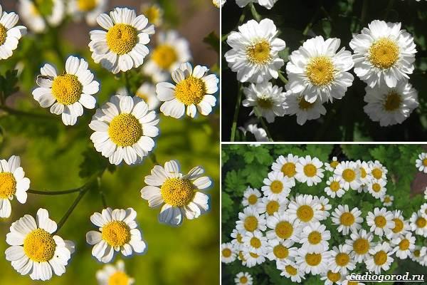 Какие-цветы-посадить-на-даче-47