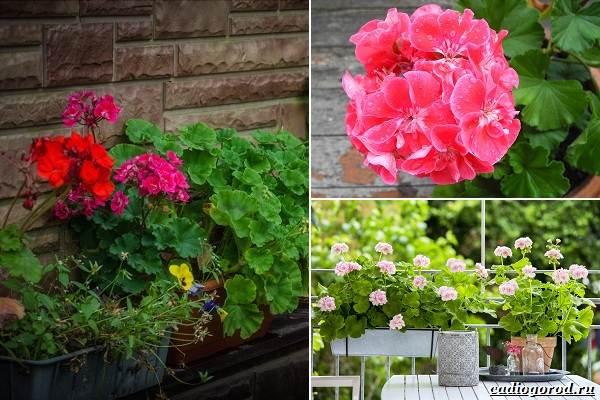 Какие-цветы-посадить-на-даче-48