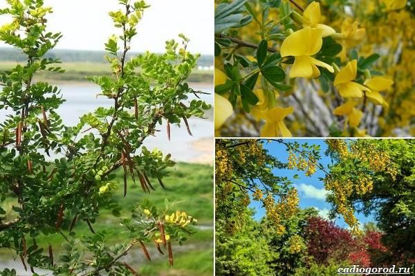 Какие-цветы-посадить-на-даче-49