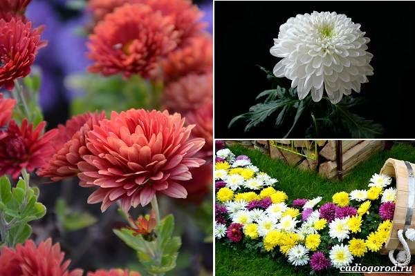 Какие-цветы-посадить-на-даче-5