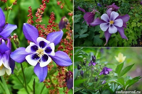 Какие-цветы-посадить-на-даче-6
