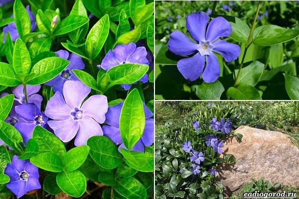 Какие-цветы-посадить-на-даче-7