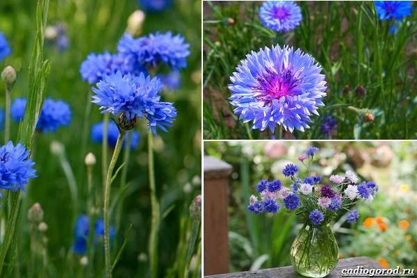 Какие-цветы-посадить-на-даче-8