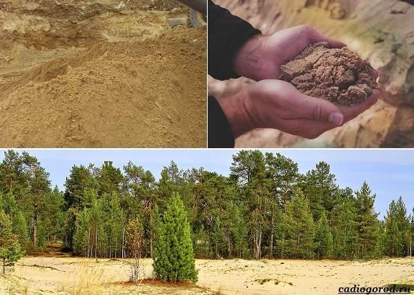 Состав-и-виды-грунта-для-растений-2
