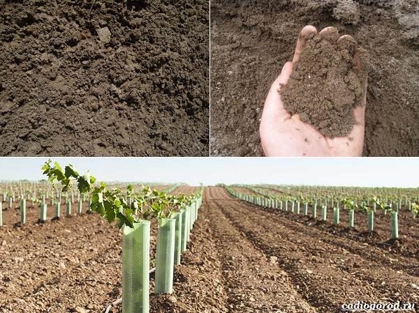 Состав-и-виды-грунта-для-растений-3