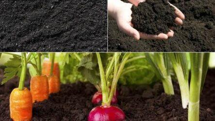 Состав и виды грунта для растений