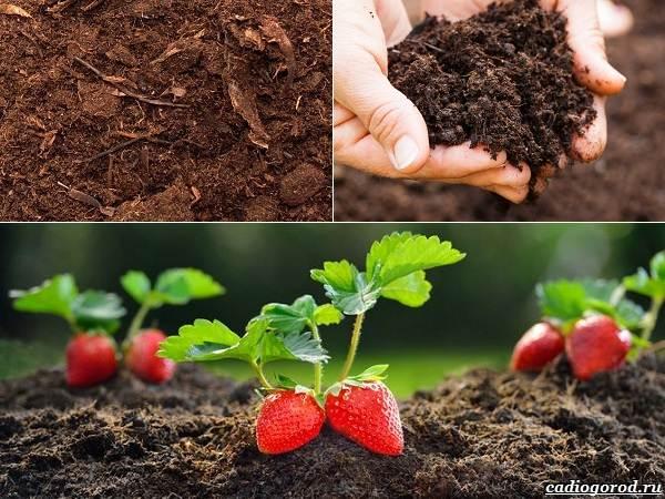 Состав-и-виды-грунта-для-растений-6