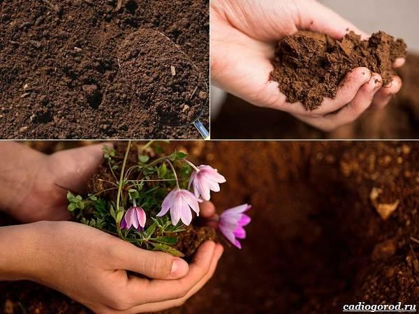 Состав-и-виды-грунта-для-растений-8