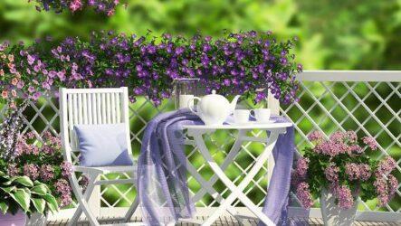 Какие цветы для дачи и балкона цветут дольше