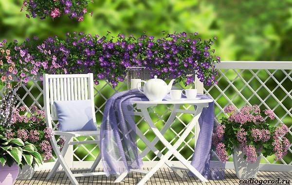 Какие-цветы-для-дачи-и-балкона-цветут-дольше-1