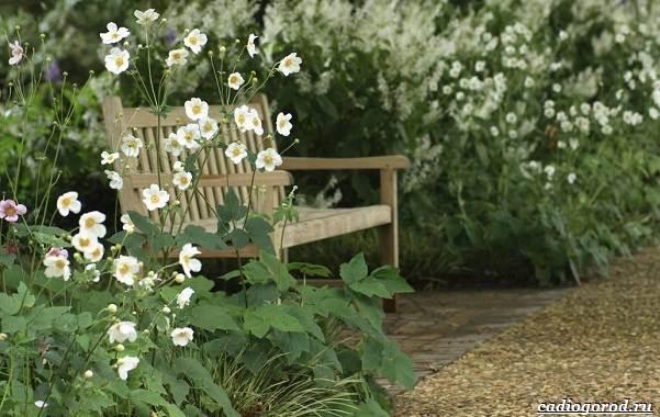 Какие-цветы-для-дачи-и-балкона-цветут-дольше-28