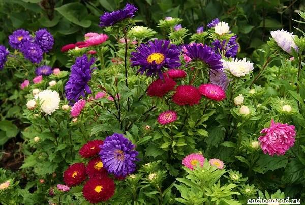 Какие-цветы-для-дачи-и-балкона-цветут-дольше-3