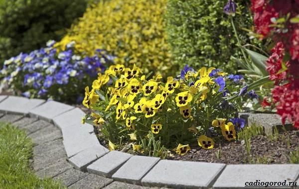Какие-цветы-для-дачи-и-балкона-цветут-дольше-4