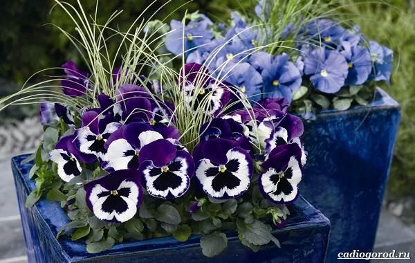 Какие-цветы-для-дачи-и-балкона-цветут-дольше-5