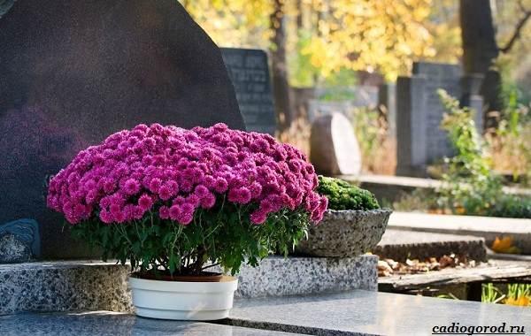 Что-посадить-на-кладбище-14