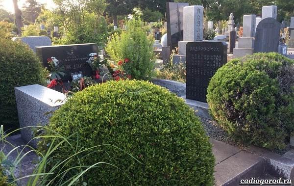 Что-посадить-на-кладбище-17