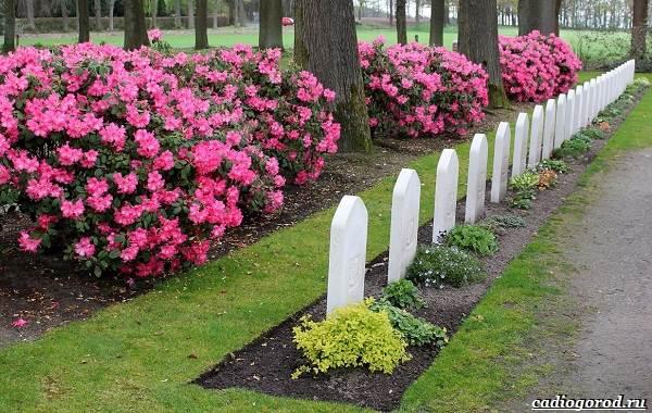 Что-посадить-на-кладбище-2
