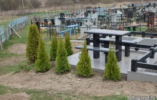 Что-посадить-на-кладбище-20