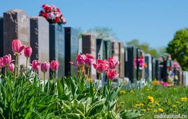 Что-посадить-на-кладбище-6