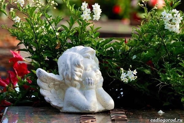 Что-посадить-на-кладбище