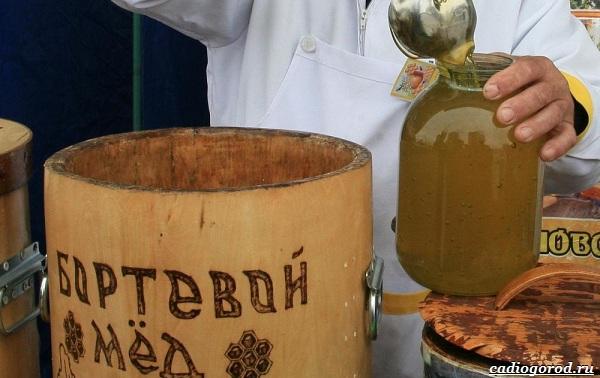 Что-такое-бортевой-мёд-13