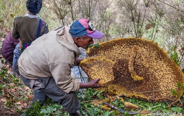 Что-такое-бортевой-мёд-6