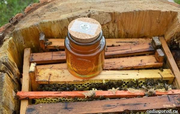 Что-такое-бортевой-мёд