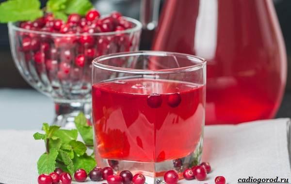 Брусника-ягода-особенности-свойства-виды-и-сорта-14