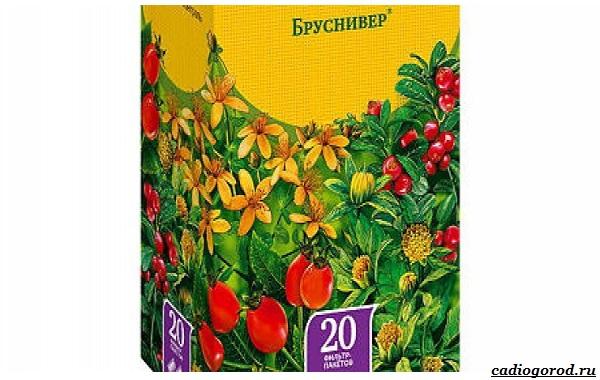 Брусника-ягода-особенности-свойства-виды-и-сорта-27