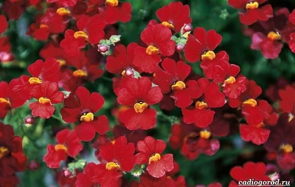 20-видов-красных-цветов-для-дома-и-дачи-57