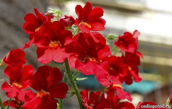 20-видов-красных-цветов-для-дома-и-дачи-58
