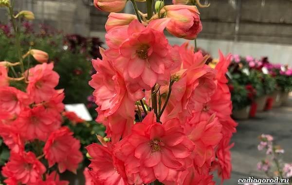 20-видов-красных-цветов-для-дома-и-дачи-59
